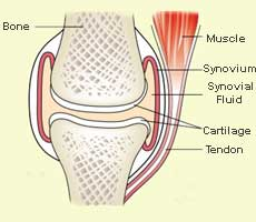 synovium fluid - knee